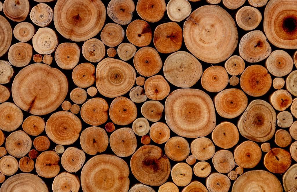 eucalyptus woods textures and backgrounds